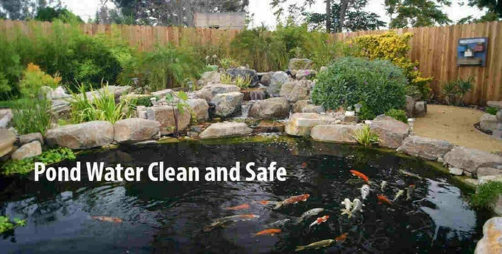 Keep the pond water clean and safe