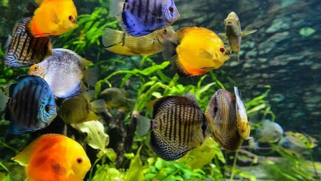 Hardwater Aquarium Fish Species