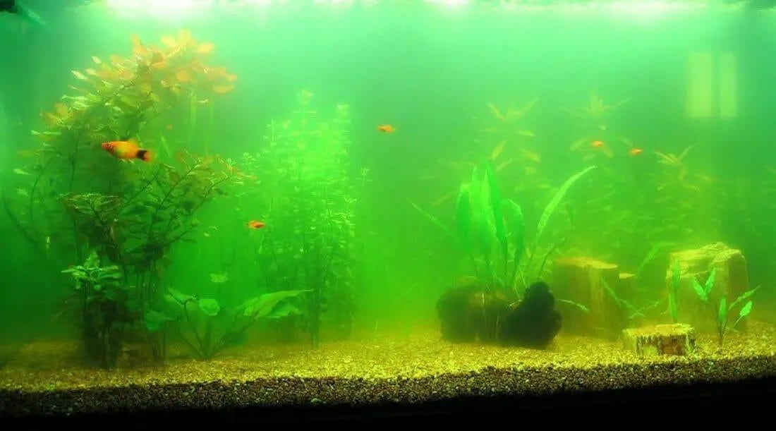 Why Should You Soften Your Aquarium Water?