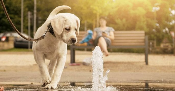 If you have a large breed dog, consider getting a water fountain for your dog